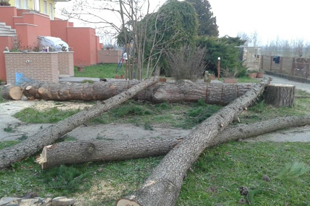 Abbattimento e taglio alberi a venezia e treviso - Alberi bassi da giardino ...